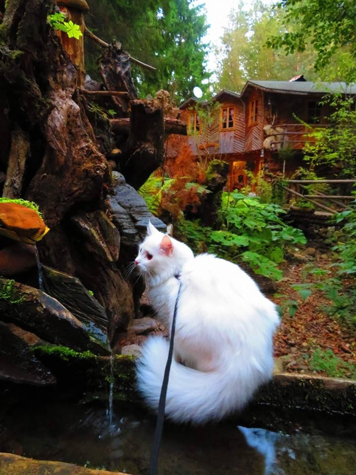 Комплекс Гераница – приказно красиво място в Родопите
